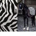 """""""Africa"""" Jacquard black and white velvet fabric Casal"""
